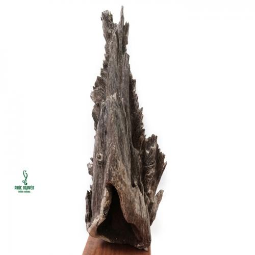 Sự kỳ diệu của gỗ trầm hương quý hiếm đối với sức khỏe